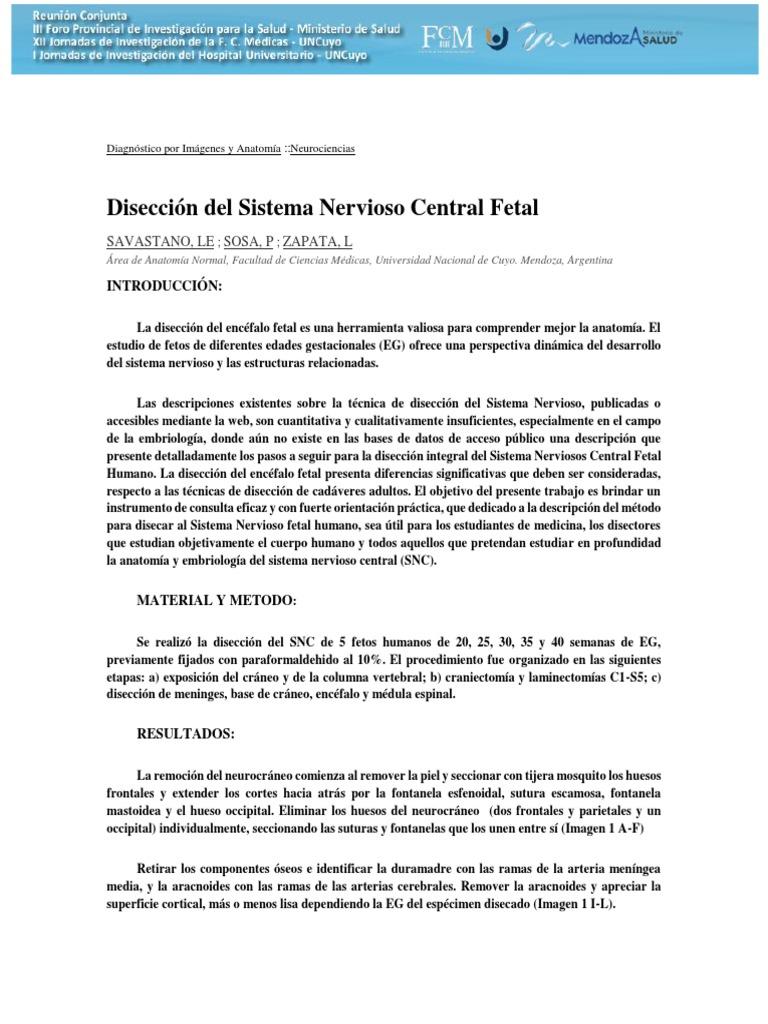 Sabastano Et Als Disección Del Sistema Nervioso Central Fetal