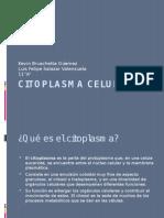 citoplasmacelular-