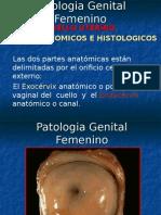 Patologia Genital Femenino CUELLO