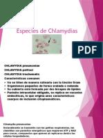 Especies de Chlamydias