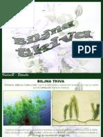 Biljna tkiva.pdf