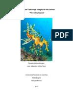 Monografía Dragón de Mar Foliado