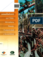 Eucalyptus camaldulensis en Chile