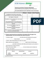Diffusion Osmosis and Active Transport Worksheet 1yseudb