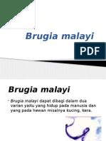 Brugia malayi nn