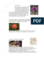 Fabaceae Endémicas de Arequipa