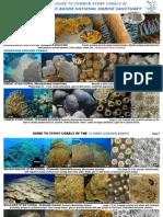 guía de identificación de corales