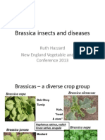 Brassica Insects & Diseases; Gardening Guidebook for Hampshire County, Massachusetts