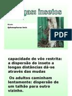 Pragas e Daninhas. Sta Vit. PDF