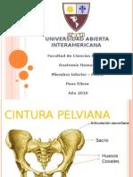 pelvis-100509144739-phpapp02