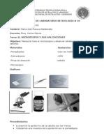 El microscopio y sus aplicaciones (epidermis de la cebolla)