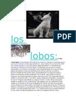 El Lobo (Canis Lupus) Es Un Mamífero