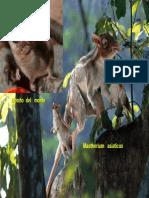 biofactores.pdf