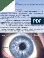 analizat acustico-vest si ochiul.ppt