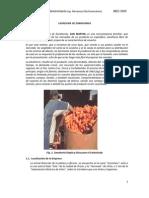 LAVADORA DE ZANAHORIAS ROVER.pdf