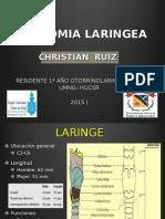 Anatomia Laringe
