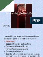 Fermentacion_Malolactica_c11