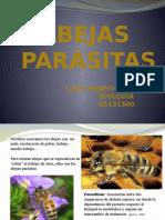 abejas parasitas