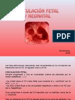 Circulacion Fetal y Neonatal