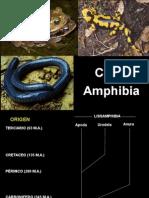 Anfibios Clase