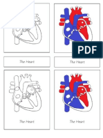 Heart Nomenclature