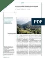 degradacion bosque