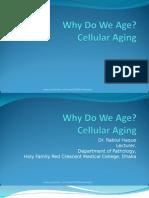 cellular aging 2