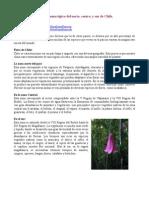 Flora y Fauna Tipica de Chile