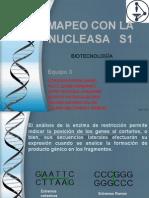 Mapeo Con Nucleasa s1