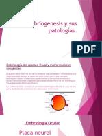 Embriogenesis y Sus Patologías