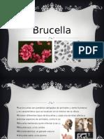 Brucellas abortus