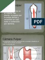 Anatomia y Apertura DENTAL