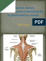 Clase de La Semana 15 Pared Torácica y Mamas 2013