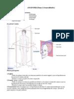 Resumen Anatomia