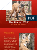 science evolution project-maned wolf