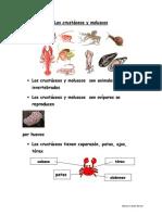 Animales Crustaceos y Moluscos
