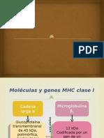 MHC clase I