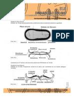 Guías de Embriología 2013 - GUIAS DE LECTURA sistema nervioso2013.pdf