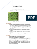 Azolla as Livestock Feed