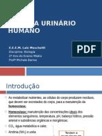 Sistema Urinário Humano