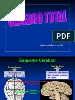 Archivo Cerebro Total - EDWIN MAMANI HUACANI