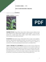 NOMBRE DE PLANTAS MEDICINALES INDIGENAS.doc