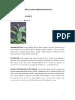 Plantas Medicinales Indigenas