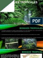 Exposicion  Bosques Tropicales del mundo