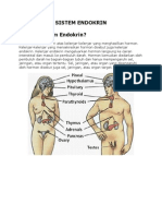 Sistem Hormon Endokrin kelas xi