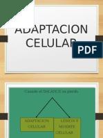 Adaptacion Celular Ppt