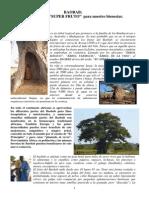 El Fruto Del Baobab