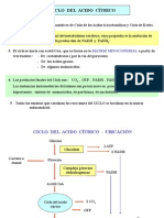 3. Ciclo Del Acido Citrico (1)