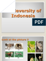 Biodeversity of Indonesia