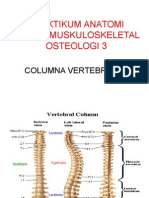 Collumna Vertebralis